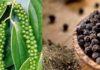 Lợi ích và tác dụng của hạt tiêu đen