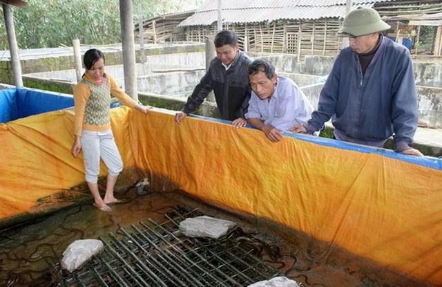 mô hình nuôi lươn không bùn