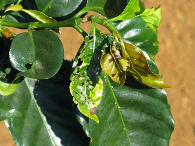 vai trò của canxi đối với cây trồng