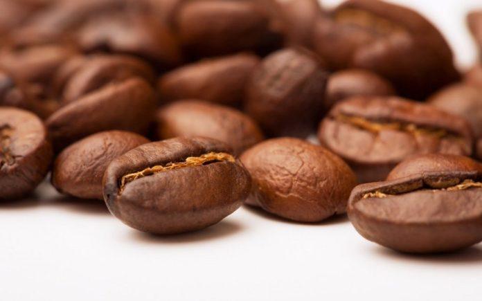 Phương pháp chọn giống và ủ mầm hạt cà phê