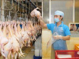 thịt giảm giá